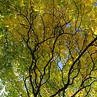 Salcey Forest in Autumn by KUJO-Photo