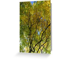 Salcey Forest in Autumn Greeting Card