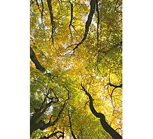 Autumn Glory Photographic Print