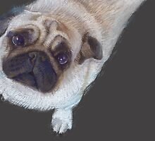 Pastel Pug by Katie Lancaster