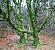 Green tree by DES PALMER
