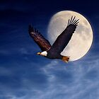 Fly Me to the Moon by Kathy Weaver