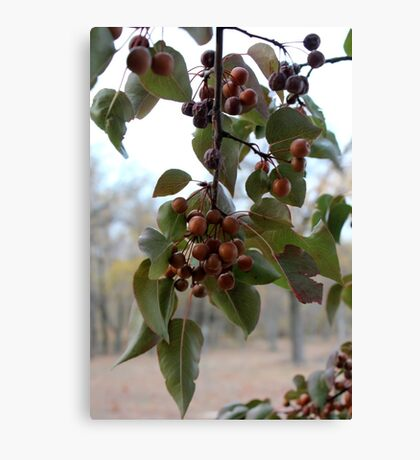 Autumn Fruit Tree Canvas Print