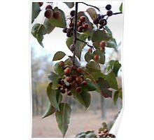 Autumn Fruit Tree Poster