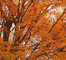 Maple by vanceadkins