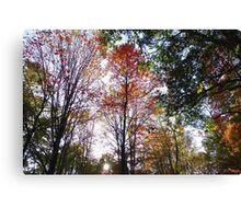 Sunset through fall trees Canvas Print