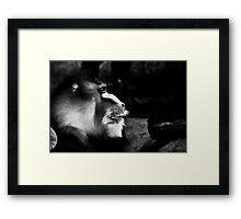 Monkey looks Framed Print