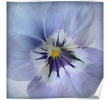 Wild Pansy Poster