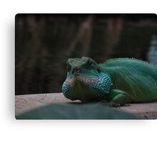 Lizard Iguana Reptile Dragon Canvas Print