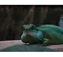 Lizard Iguana Reptile Dragon Photographic Print