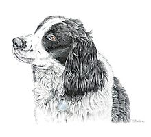 Paddy - King Charles Spaniel Photographic Print