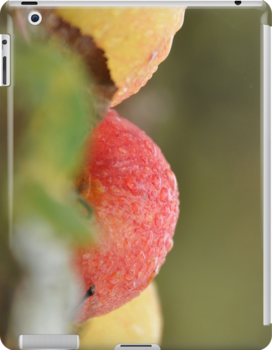 Dewy  Apples  IPad case by Heather Thorsen