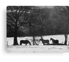 Wild Horses in Snowy Fields Canvas Print