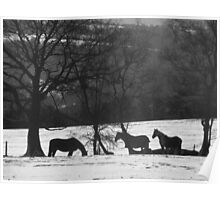Wild Horses in Snowy Fields Poster