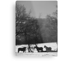 Wintery Equine Metal Print
