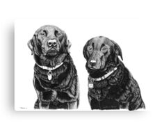 Josh and Toby - Black Labradors Canvas Print