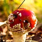 red and poisonous mushroom by hpostant