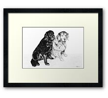 Charlie and Alfie - Golden Retrievers Framed Print