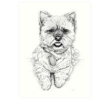 Westie - West Highland Terrier Art Print