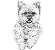 Westie - West Highland Terrier Photographic Print