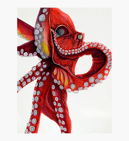 Red Octopus Photographic Print