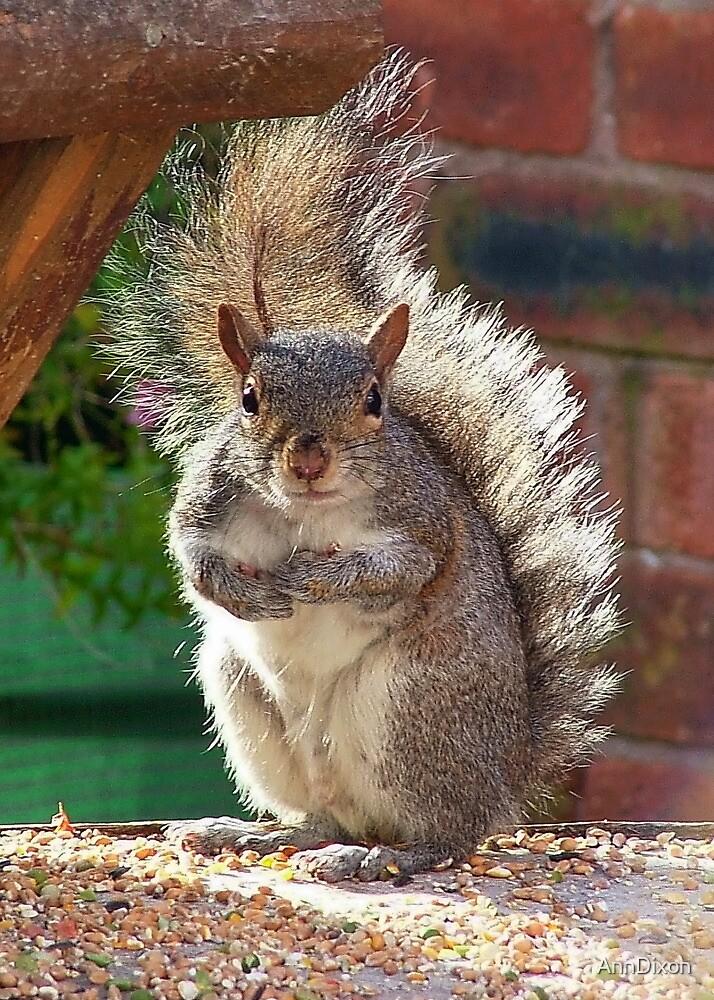 Squirrel Requesting More, by AnnDixon