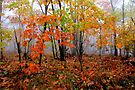 Arkansas Stix by NatureGreeting Cards ©ccwri