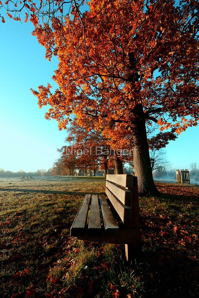 Autumn Seat by Nigel Bangert