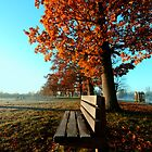 Autumn Seat by Nigel Bangert