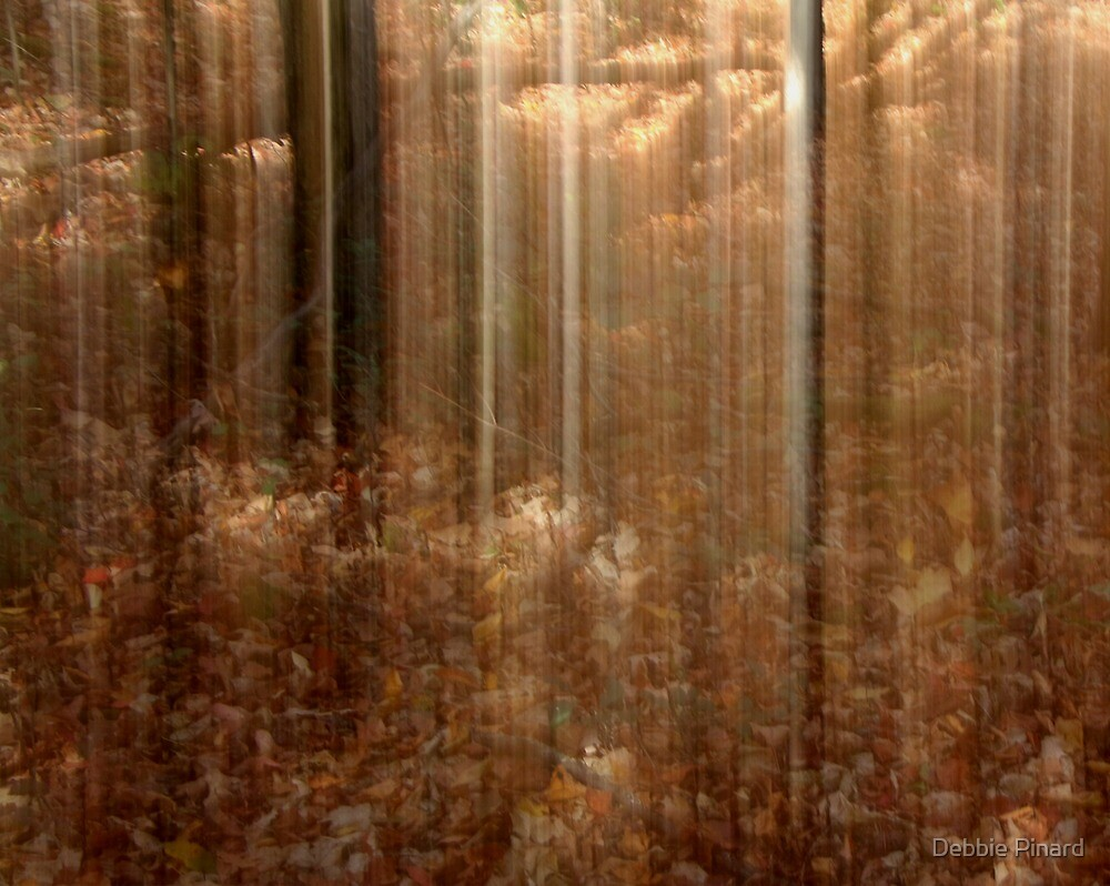 Fall Forest, Dunrobin Ontario by Debbie Pinard