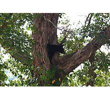 Bear - Smoky Mountains Photographic Print