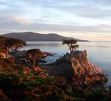 The Lone Cypress 2 by podspics