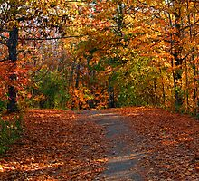 A Hiker's Dream by Docharmony