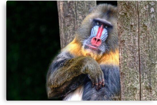 Monkey Business   by John44
