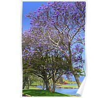 Jacaranda Tree Full Bloom Poster