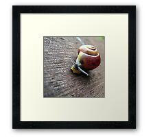 Snail on the gardenseat Framed Print