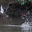 Take off!   by Trevor Farrell
