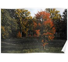 Fire-tipped Trees Poster