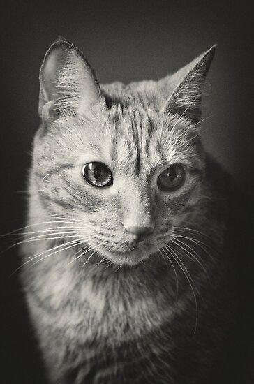 Old Red Tabby Mackerel Cat by Arkadiy Chernov