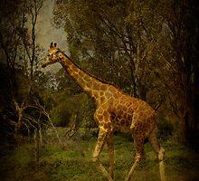 Afternoon Stroll by Shari Mattox-Sherriff