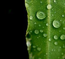 Rain Drops On Leaf by abocNathan