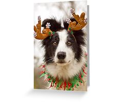 Reindeer Collie Greeting Card