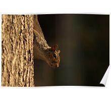 Crouching Squirrel, Hidden Nut Poster