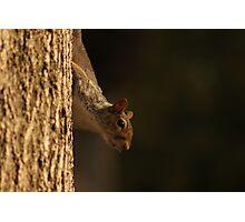 Crouching Squirrel, Hidden Nut Photographic Print