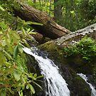 Waterfall - Gatlinburg Tennessee by Tony Wilder