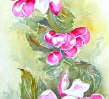 Apple Blossom Sticker