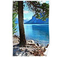 Rooted On Lake Minnewannka Poster