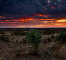 Yucca  Tree Sunset(View Large) by DawsonImages