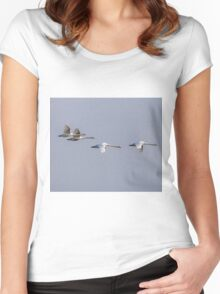 Family of Mute swans in flight Women's Fitted Scoop T-Shirt