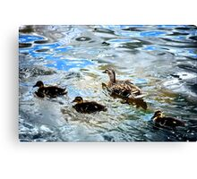 Mother Duck and Ducklings Canvas Print